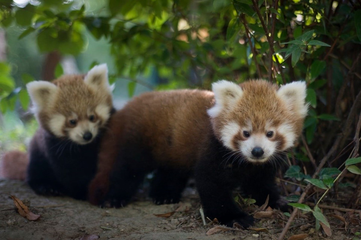 Photo of The Zagreb Zoo Needs Your Help Picking the Names!
